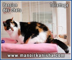 kanisha-pub-chat.jpg