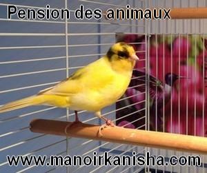 animaux-300x250.jpg