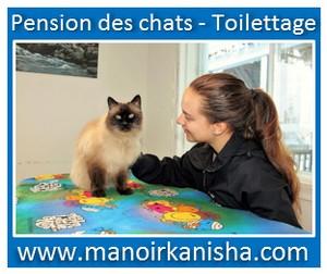 chats-2.jpg