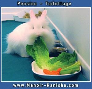Manoir-Kanisha-lapin.jpg