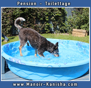 MK-CiteBoomers-Dog-ad-summer-2018-photo-1.jpg