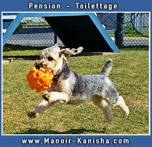 MK-CiteBoomers-Dog-ad-summer-2018-photo-2.jpg