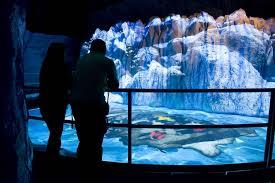 jardin des glaciers